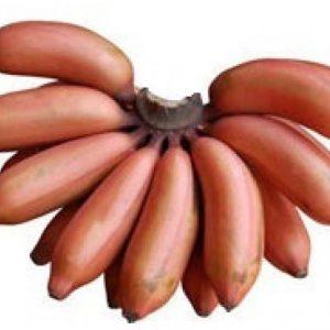 Fresh Banana Merah/Ang Kong